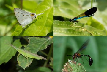 Regenwald Insekten